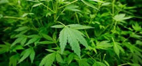 Politie vindt duizenden wietplanten in oude loods Doetinchem