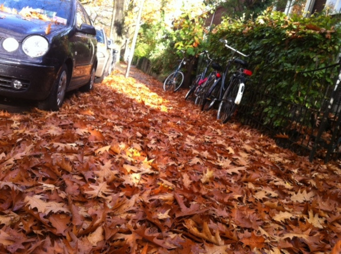 Bladeren op de weg.