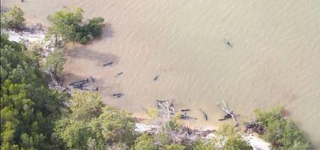 Tientallen dode dolfijnen aangespoeld in Florida