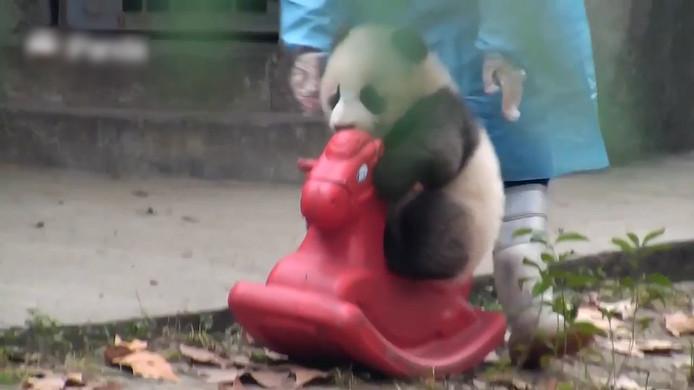 Babypanda met speelgoedpaard.