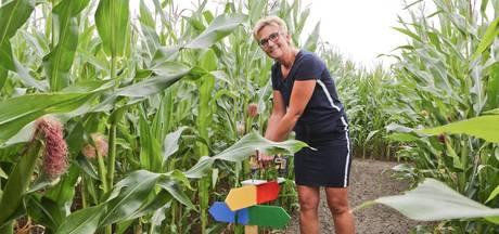 'Nooit maïs gehad, nu verdwalen we erin'