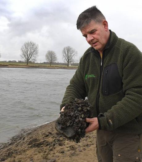 Lage waterstand Maas 'feest voor watervogels'