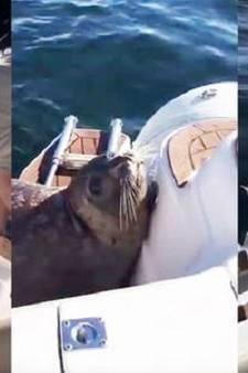 Slimme zeehond zet orka's hak met sprong op schip