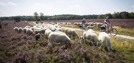 Veluwe als mooiste natuurgebied van Nederland