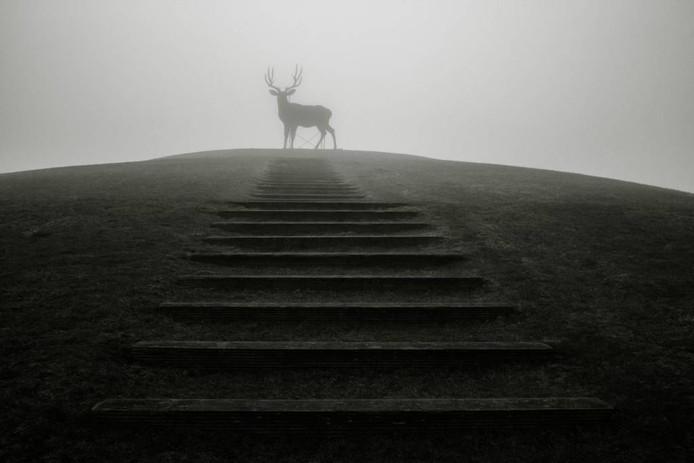 Het hert van Arnhem. Foto: Roelof de Hoog.