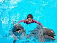 VS wil verbod op 'stressvol' zwemmen met dolfijnen