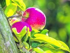 Fruittelers voelen succes nog niet
