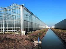 Aardbeienteler koopt er 10 hectare bij op Bergerden