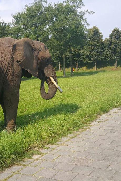Blokje om doet olifant Buba circus even vergeten