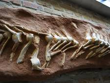 'Monster van Maastricht' onder de hamer op dinoveiling