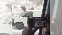 Kameel trotseert snelweg tijdens sneeuwstorm