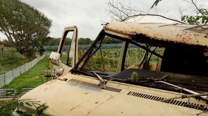 De wijngaard ligt er strak en goed onderhouden bij. Dat kan niet van alles in de buurt gezegd worden.