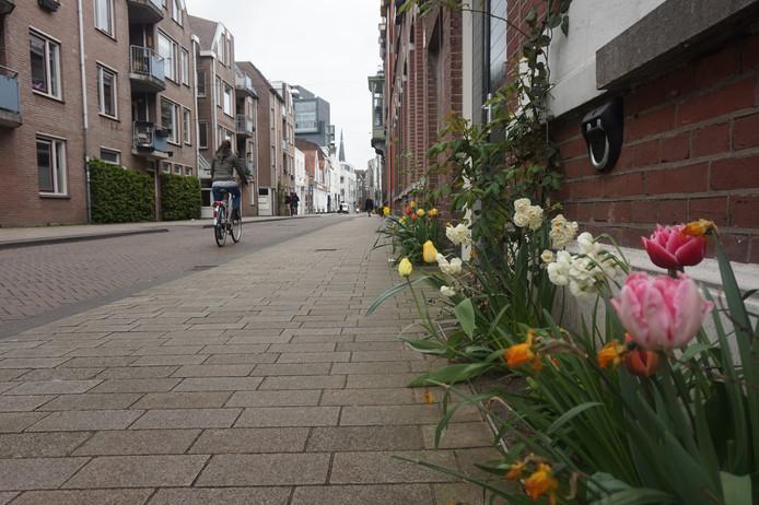 Een geveltuintje in Tilburg