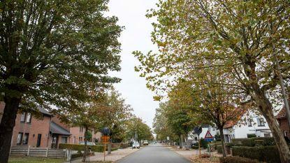 Bomen aan Edelweisstraat worden gekapt