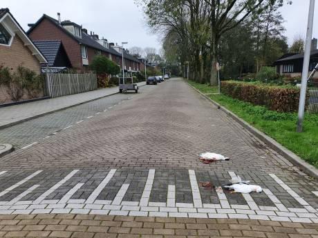 Eenden 'moedwillig' doodgereden op de Mozartlaan in Waddinxveen; buurt is geschokt