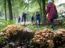 Oost-Europeanen plunderen massaal de bossen bij paddenstoelenjacht