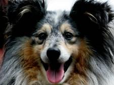 Hondendeskundige: Het zou goed zijn als honden altijd afscheid kunnen nemen, ook in ziekenhuizen