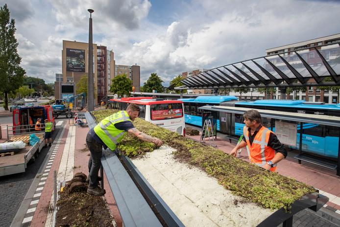 De bushaltes op de Stadsbrink in Wageningen krijgen onder toeziend oog van projectleider Remco van Ahee (rechts) een sedum dak. ,,Wageningen mag dan al relatief groen zijn, als je de binnenstad van boven ziet, dan zie je vooral zwarte daken.''