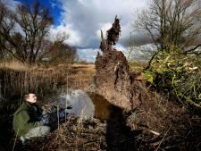 Nieuw leven in de Biesbosch nadat storm ravage achterliet