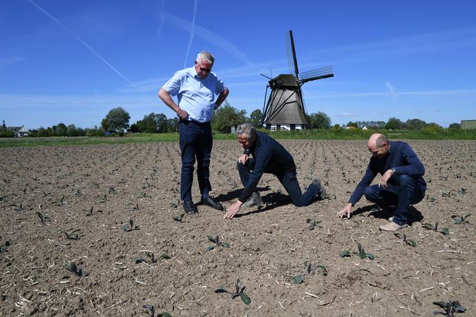 Adri den Dekker, Wim Straver en Marko Wolthuis (van links naar rechts) op de akker bij Almkerk.
