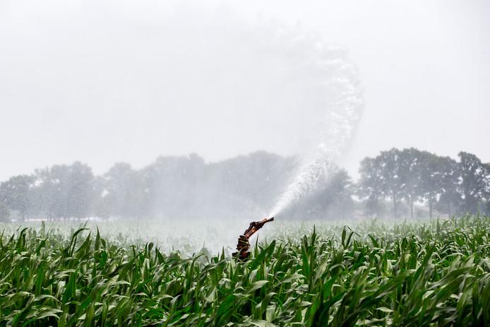 Vanwege de aanhoudende droogte stelt Waterschap Rivierenland vanaf woensdag 25 juli in het hele rivierengebied een beregeningsverbod met oppervlaktewater in.
