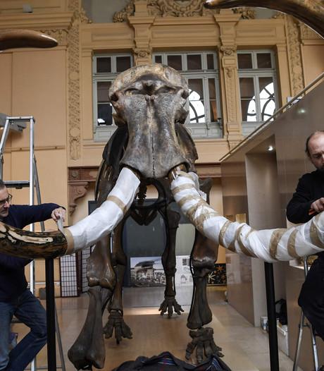 Ruim half miljoen euro voor mammoetskelet