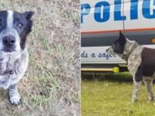 Dove en deels blinde hond ontfermt zich over verdwaald meisje (3)