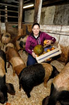 Deze Vlaardingse varkenshouder is dol op haar beesten: 'Het blijft lastig om ze naar slacht te brengen'