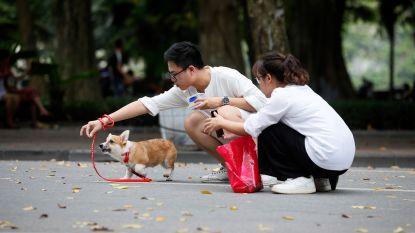 Vietnamees duo opgepakt na vergiftiging 30 honden en katten