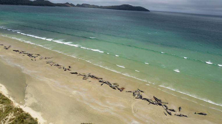 De aangespoelde grienden op het strand van Nieuw-Zeeland.