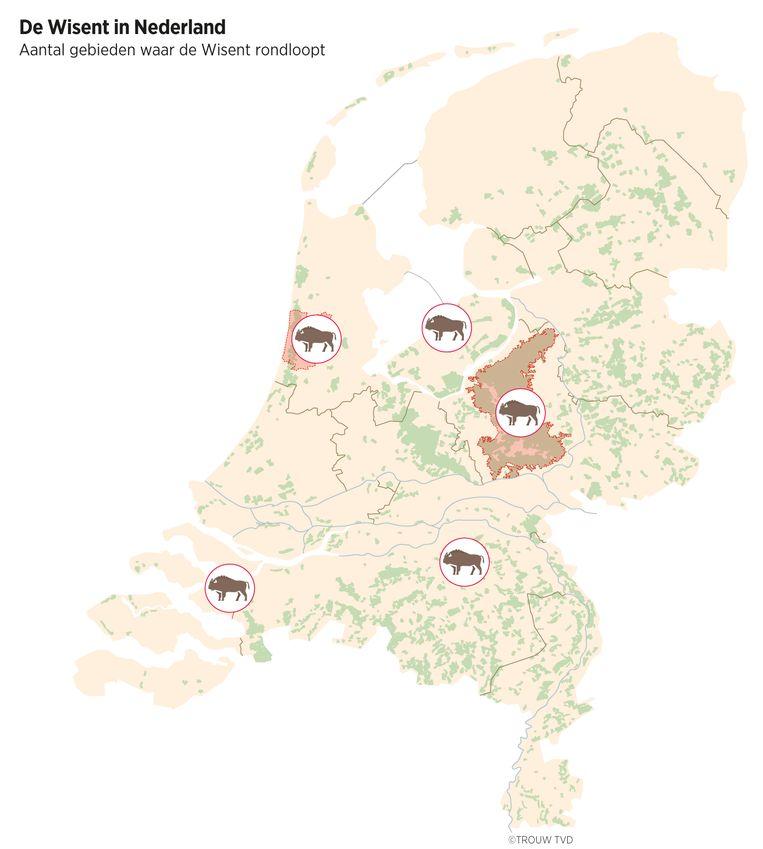 Natuurgebieden in Nederland waar wisenten zijn uitgezet. Beeld Thijs Van Dalen