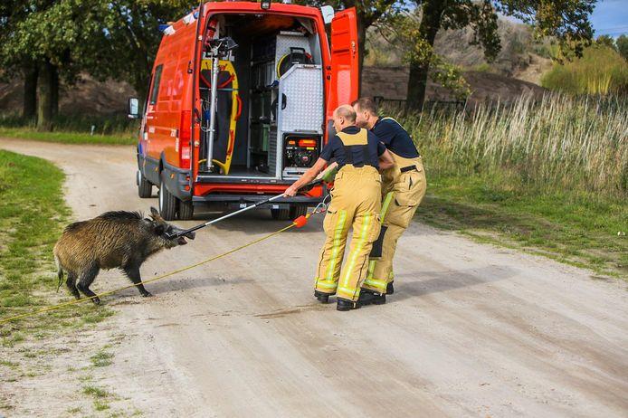 Het dier werd met een vangstok gered.
