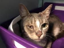 Nieuwsoverzicht | Bedreiger moet excuusbrief schrijven - Zieke katten uit vakantiehuis gehaald