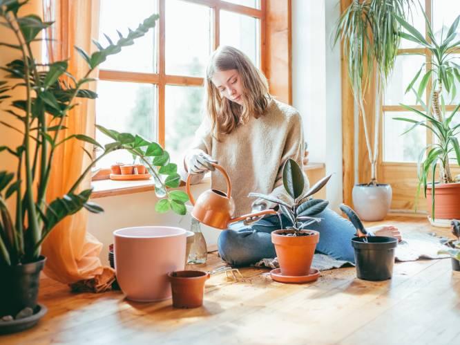 Waarom kamerplanten goed zijn voor je gezondheid en de 8 perfecte planten om in huis te halen