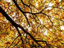 Sliedrecht krijgt 900 nieuwe bomen en inwoners mogen zelf de locaties doorgeven