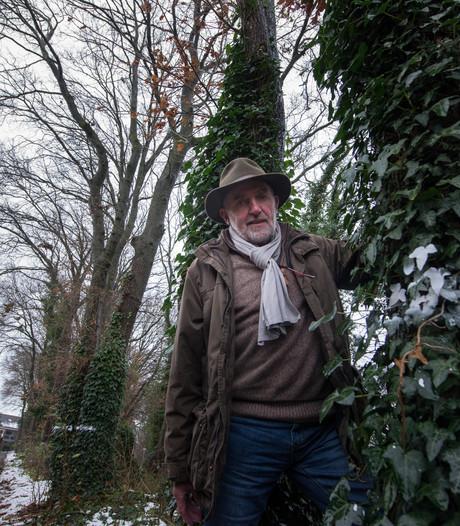Ommen wil historisch waardevolle bomen kappen in woonwijk