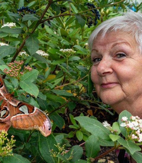 De grootste vlinders ter wereld! En ze zijn zes dagen te zien in de tuin van Mariaoord