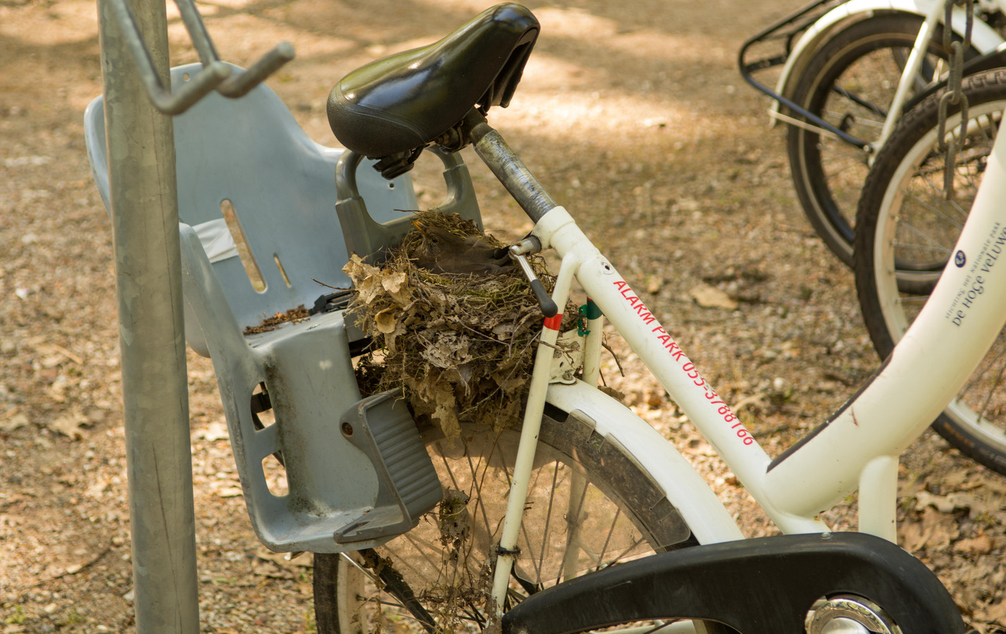De Covid-19 merel heeft een nest gemaakt op een witte fiets.