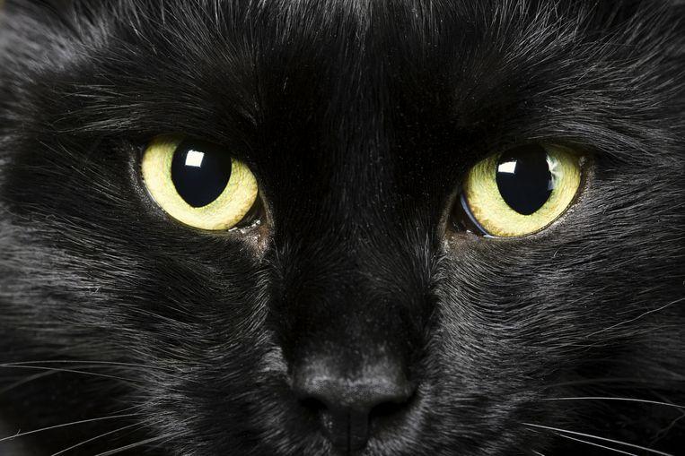 Wanneer bijgeloof in onze cultuur ingebakken zit, zoals angst voor zwarte katten, zijn we geneigd het in ere te houden.