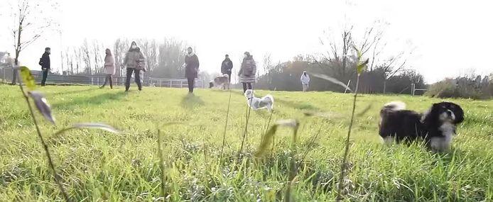 De hondenweide wordt begin 2021 aangelegd en is een samenwerking tussen de stad en het Agentschap Het Bos.