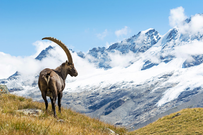 Het majestueuze Gran Paradiso nationaal park ligt vlakbij Locana.