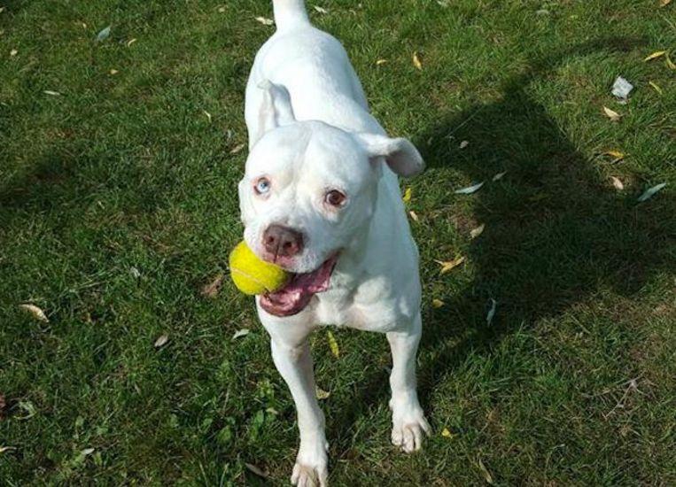 Lola heeft meegedaan aan het trainingsprogramma van Dutch Cell Dogs. Beeld DOA