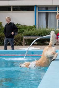 Honden met een plons in de plomp op de 'hondenplons'