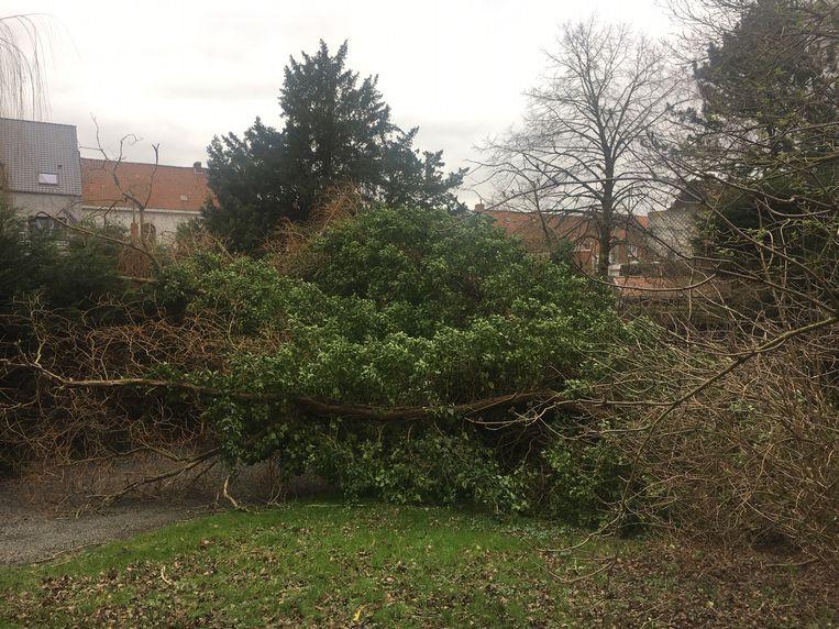 Aan de Rietput in Bissegem (Kortrijk) versperde een omgevallen boom de in- en uitrit naar enkele garages.