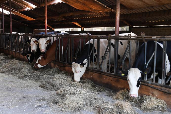 De daling is te zien bij alle soorten veebedrijven.