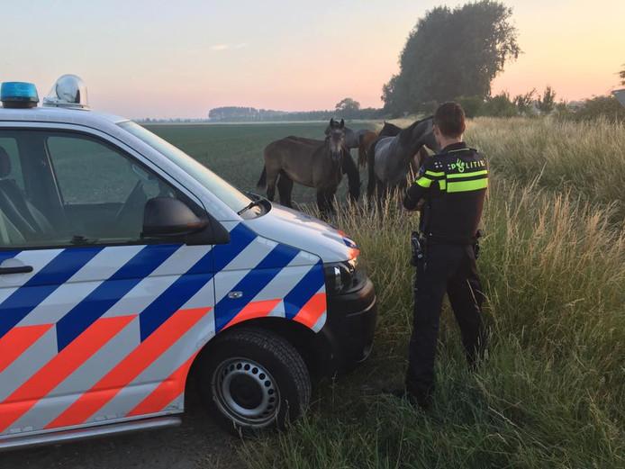 Negen paarden waren maandagochtend losgebroken uit een wei.