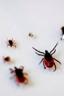 7 vragen aan de onderzoekers die ruim 15.000 teken testen op levensgevaarlijk virus