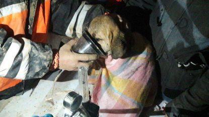 Hondje na 10 dagen uit 70 meter diepe schacht gehaald