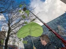 Alphen vraagt inwoners: 'Welke boom verdient monumentale status?'