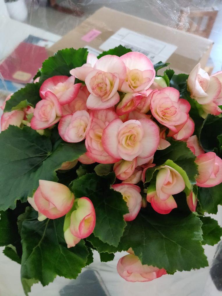 Dit zijn de bloemen die de oplichter verkoopt voor 10 euro